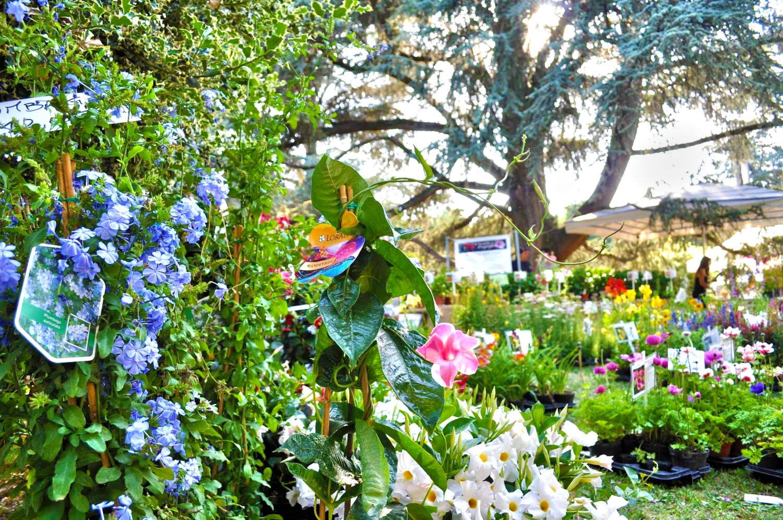 Borgo San Lorenzo fiorisce con Fiorinfiera-Nel Borgo fiorito